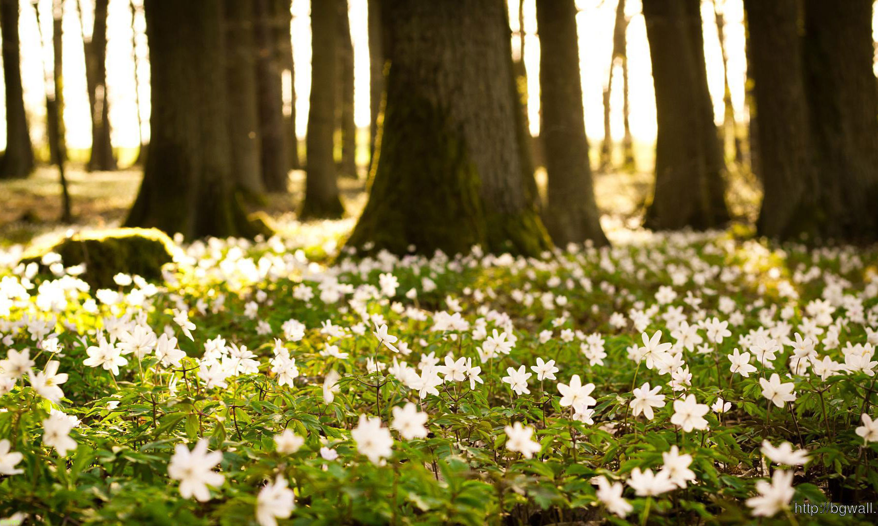 Flowers In Spring Forest Wallpaper Hd The Old Manor Hotel Lundin